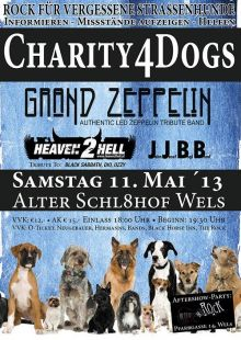 Rock for Dogs!